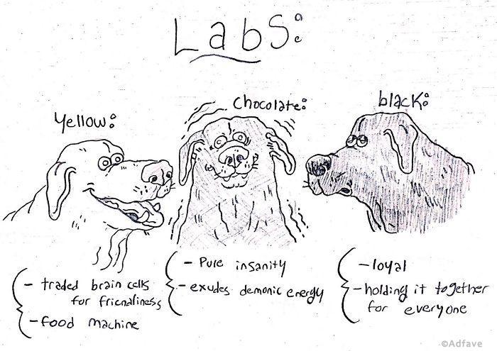 Вот смешной путеводитель по собакам всех пород. Он поможет вам выбрать 1 из них!